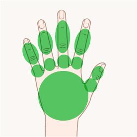 手(左右)