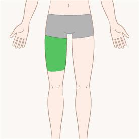 大腿(片方)